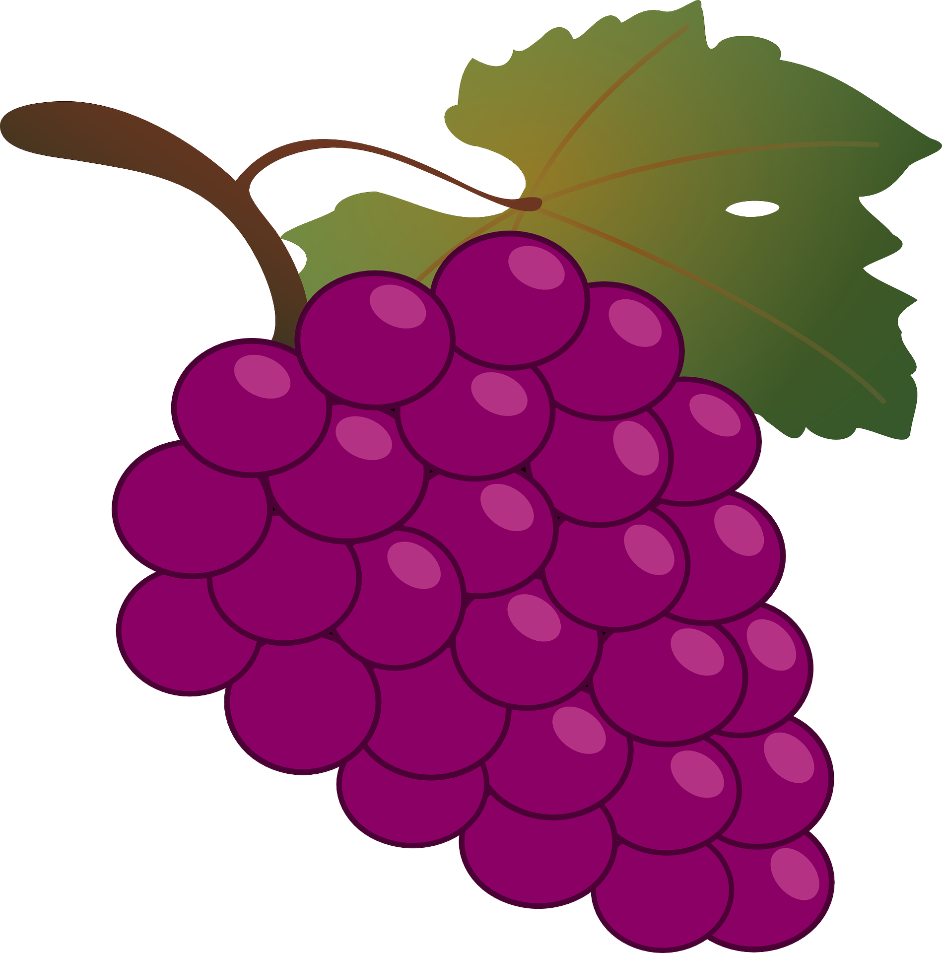 graphic Common vine wine grappa. Grape clipart greps