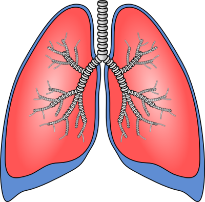 image black and white Breathing clipart human. Lungs cute borders vectors.
