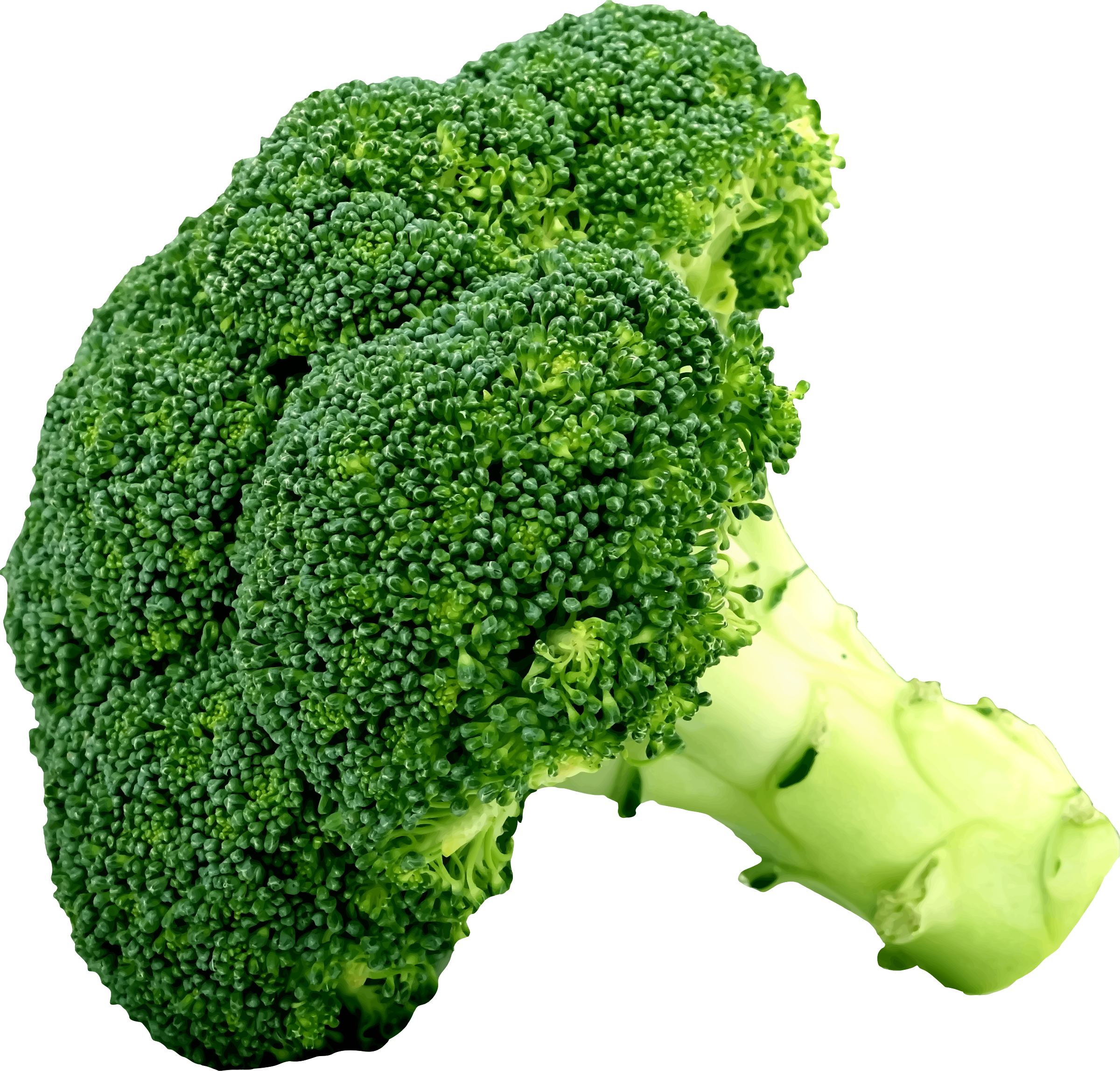picture library Big image png. Broccoli clipart.
