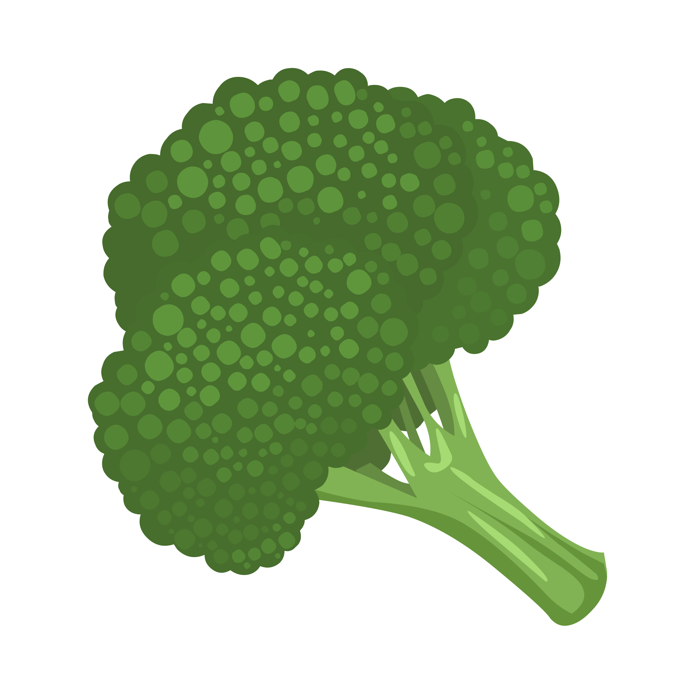 picture library stock Broccoli clipart. Free on dumielauxepices net