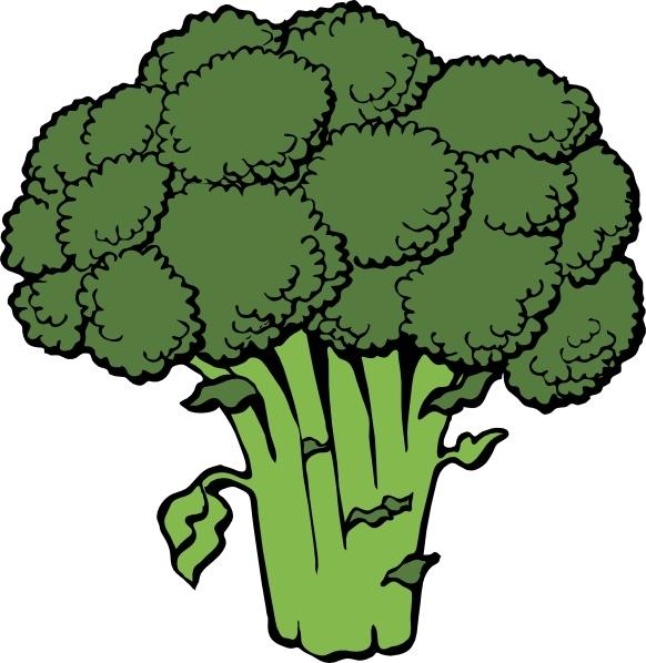transparent Broccoli clipart brocoli. Clip art free vector