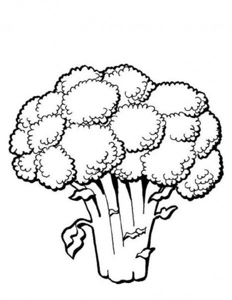 svg stock Broccoli clipart coloring book. Vegetable pages food .