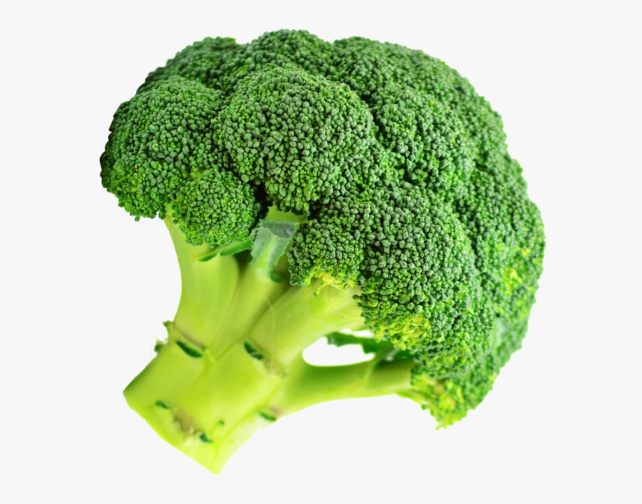 svg free download Free cliparts on clipartwiki. Broccoli clipart draw.