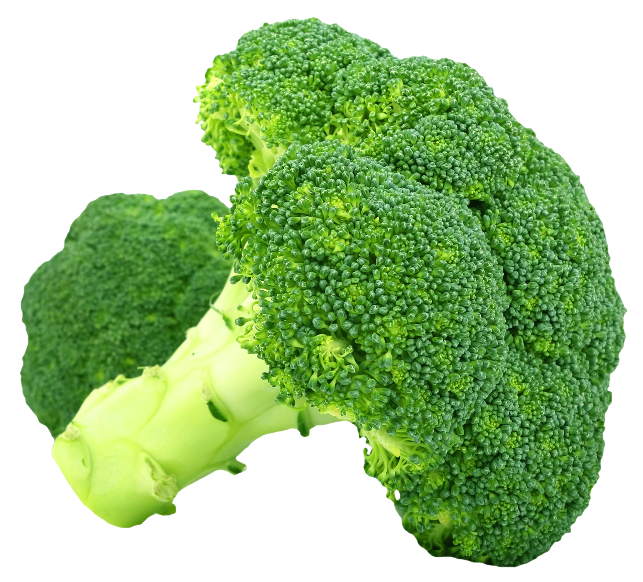 clipart free Broccoli PNG Images