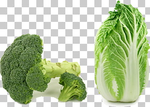 banner transparent library Leaf x free clip. Broccoli clipart lettuce.