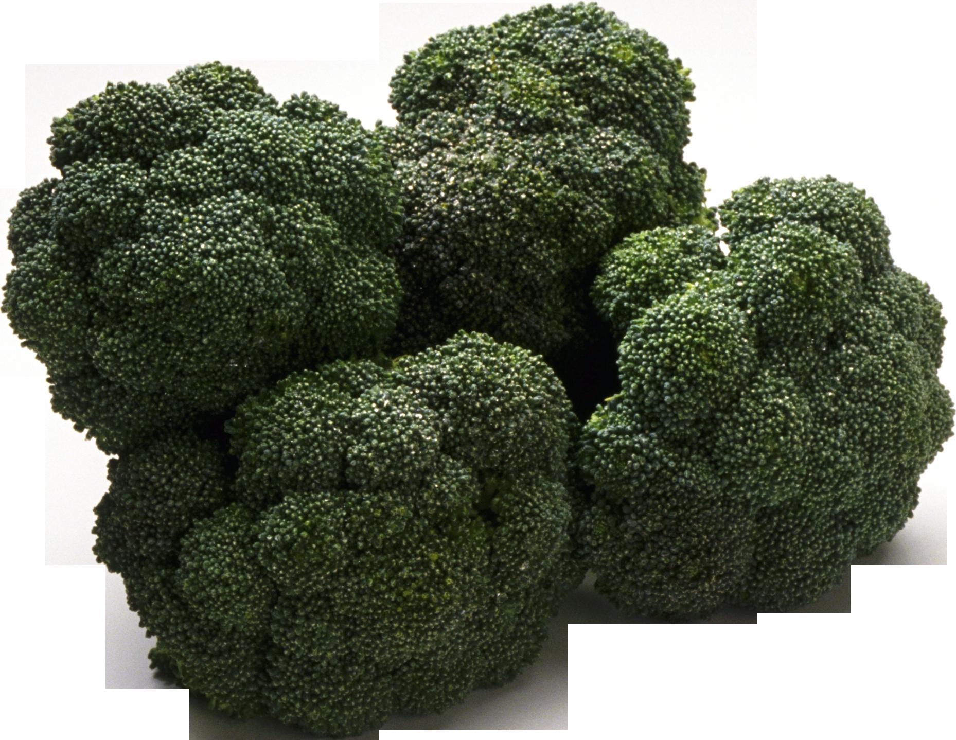 free Broccoli PNG image
