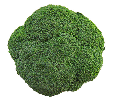 clipart free stock broccoli top view small