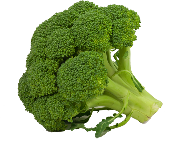 png free download Broccoli White Background Images