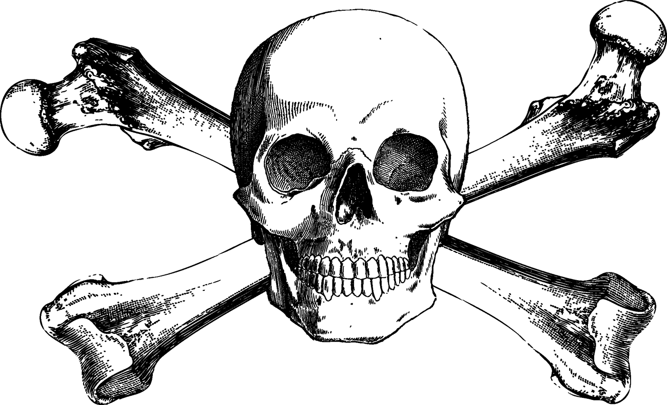 clip free stock Skull and Bones Skull and crossbones Drawing