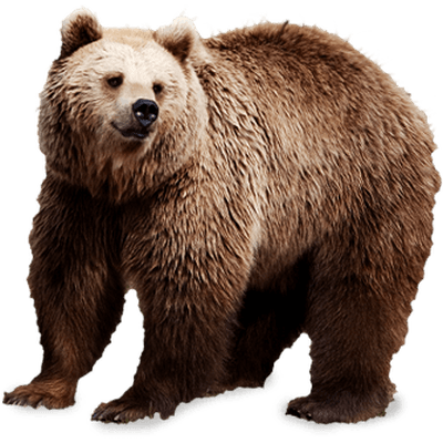 image freeuse Brown bear brown bear clipart. Bears transparent png images