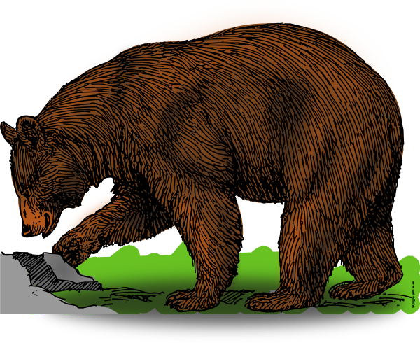 clip art transparent stock Detailed art clip at. Brown bear clipart