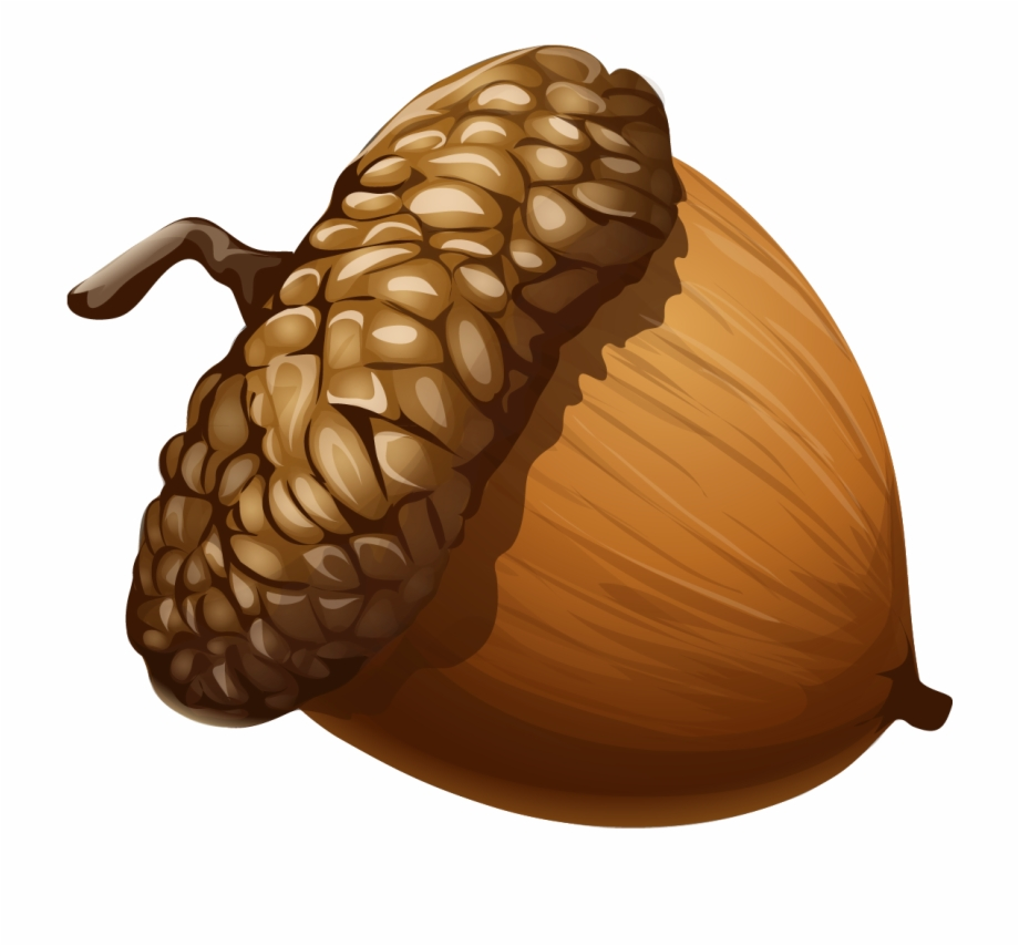 png freeuse Brown clipart acorn. Png clip art library