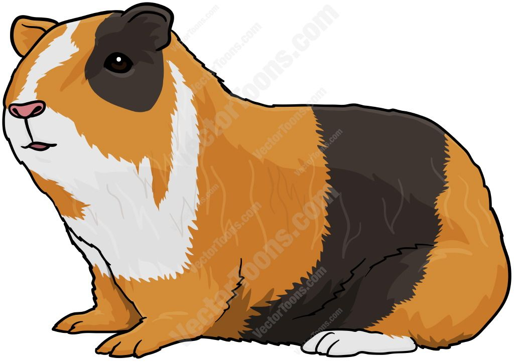 svg free Mixed pigs animals . Brown clipart guinea pig