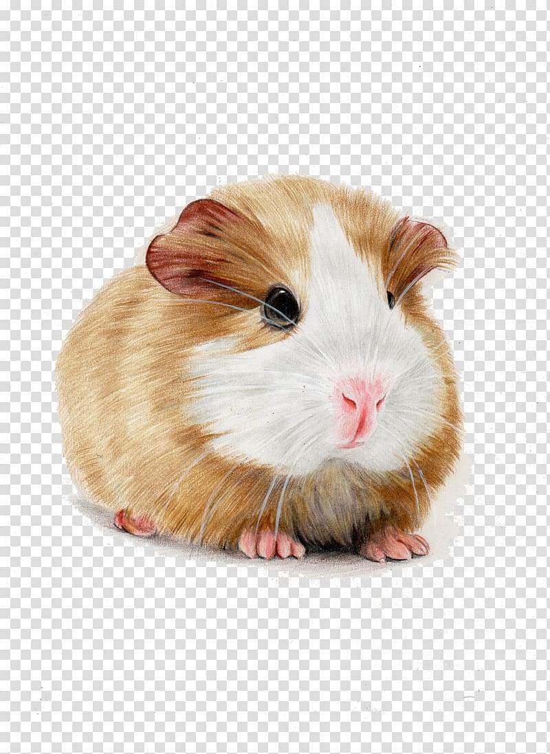 jpg transparent download And white skinny hamster. Brown clipart guinea pig