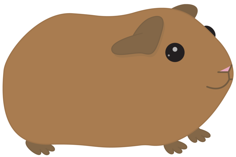 clip freeuse library Orange free on dumielauxepices. Brown clipart guinea pig