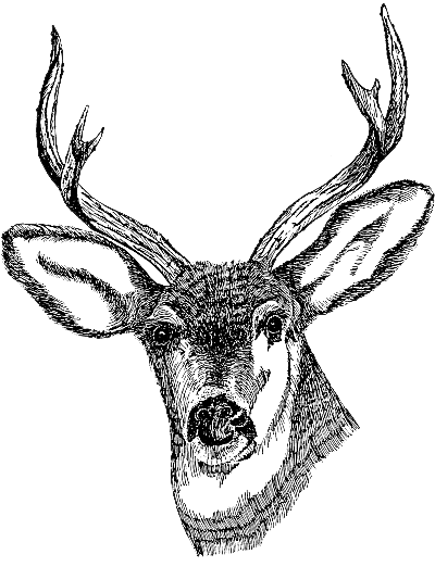 library Deer png images transparent. Buck clipart face