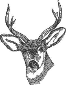clip library download Deer head clip art. Buck clipart green