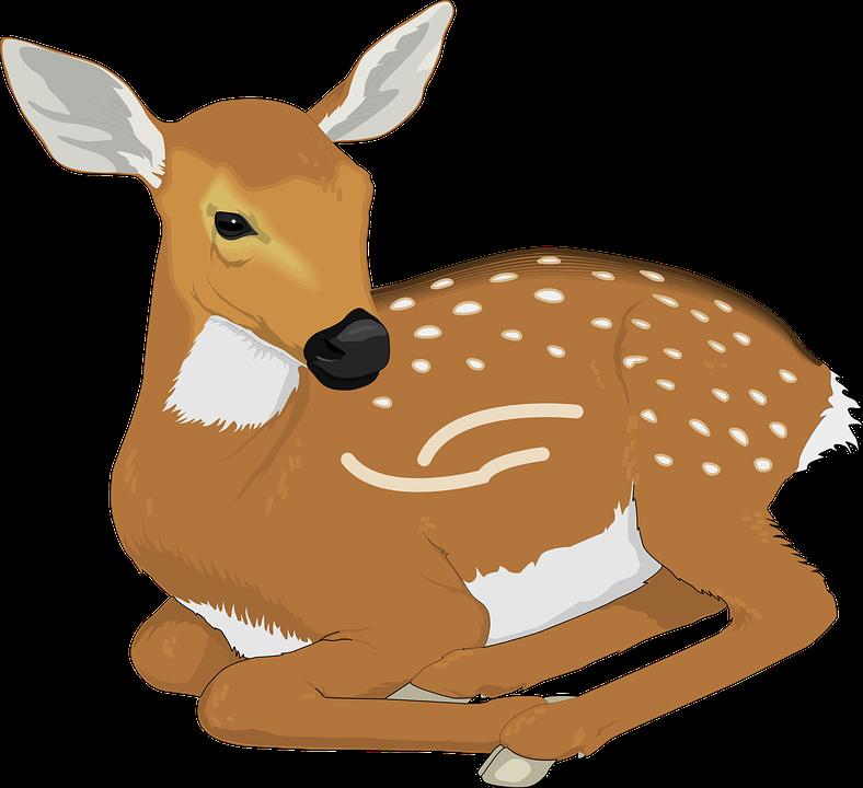 clip art transparent Dear baby deer free. Buck clipart kid