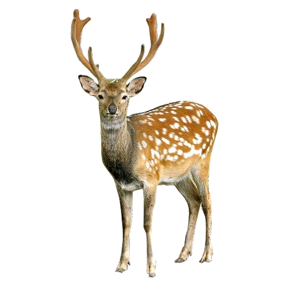 graphic black and white Buck clipart venison. Deer png images free