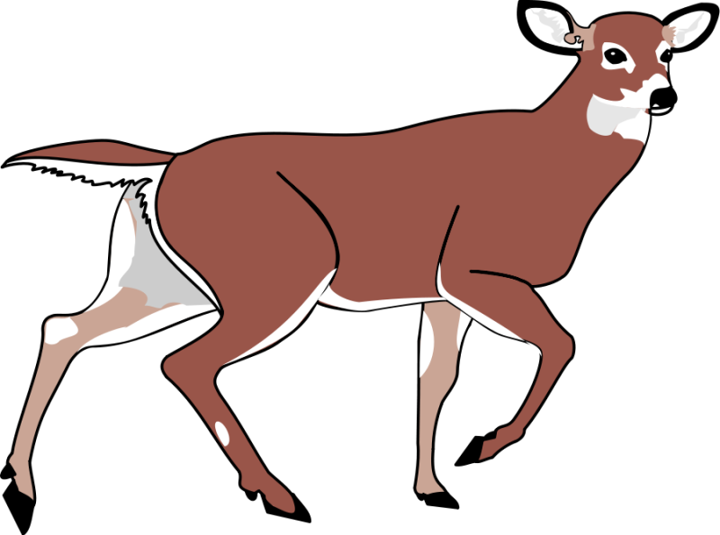 black and white stock Buck clipart whitetail deer. Hubpicture pin