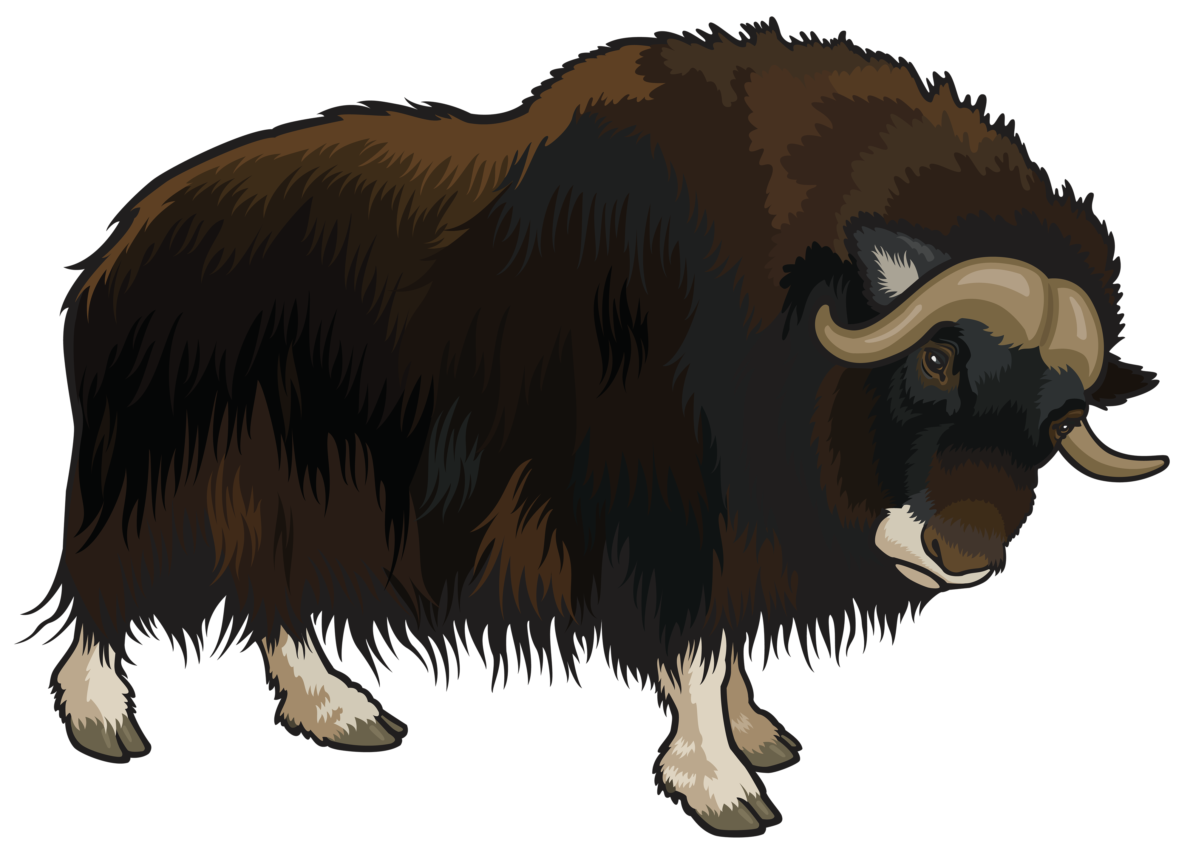 jpg royalty free Buffalo clipart. Png best web