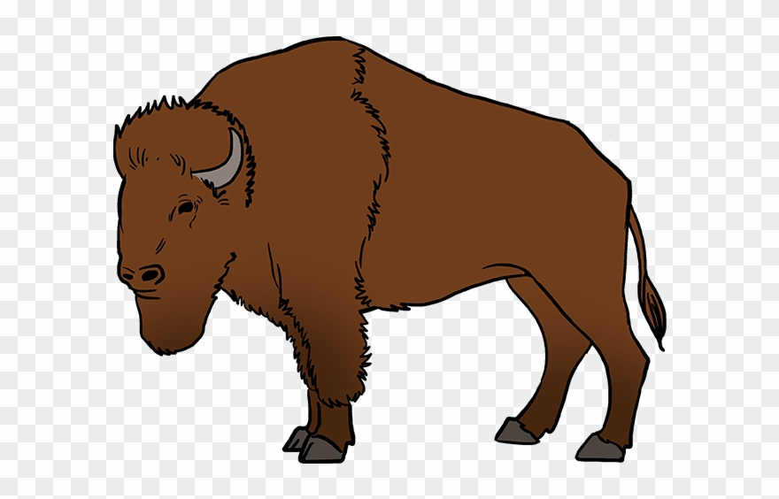 image freeuse Buffalo clipart. How to draw a.