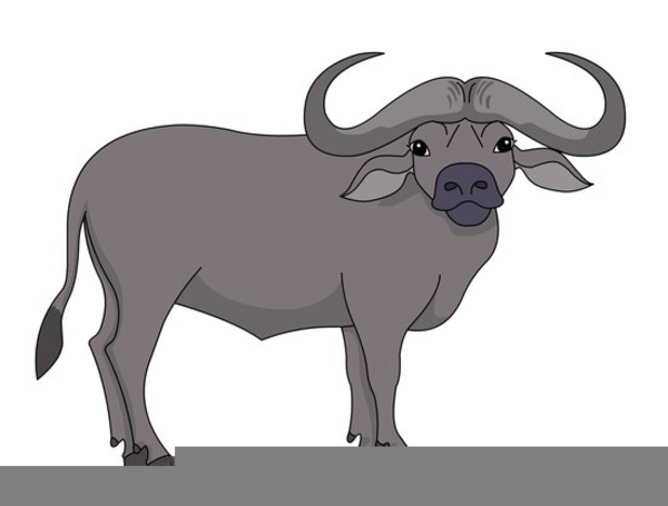 clipart transparent Buffalo clipart. Cape free images at.