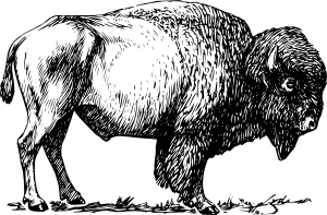 jpg black and white download Buffalo clipart bison. Clip art at clker