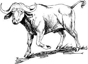 png transparent library Buffalo clipart sketch. Clip art at clker