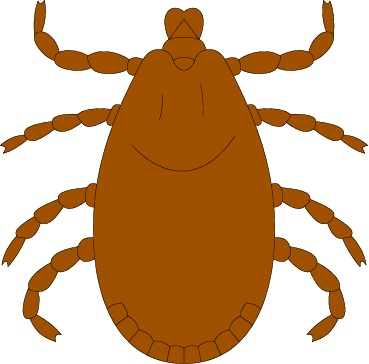 vector transparent download Bugs tick free on. Bug clipart orange bug