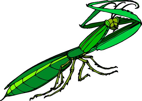 png freeuse Bug clipart praying mantis. Cartoon clip art at