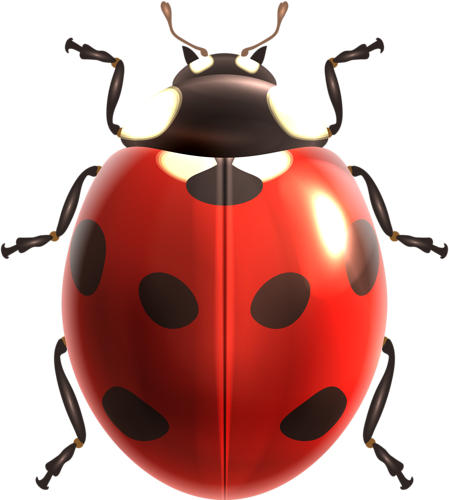 clipart freeuse download Bug clipart realistic. Insects illustrations vector png