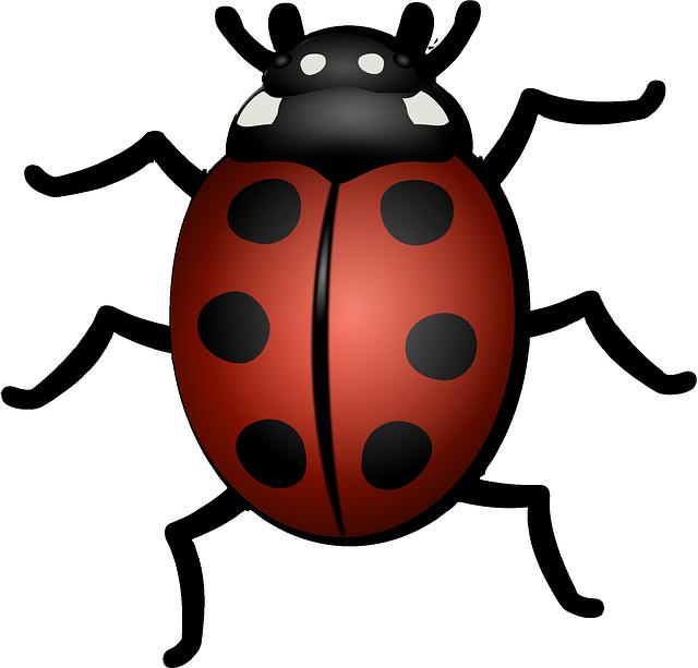 clipart library download Bug clipart realistic. Lienka prekvapenie v tr.