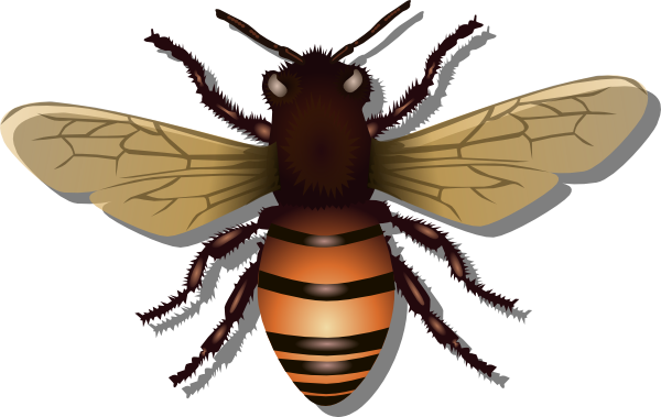 banner royalty free stock Bug clipart realistic. Pencil and in color