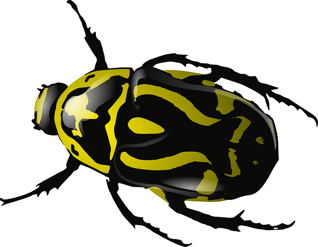 black and white library Bugs png mart. Beetle clipart transparent background.