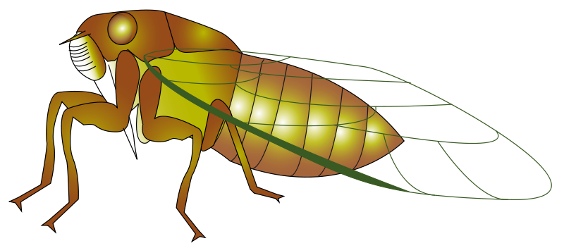 svg royalty free stock Small clipground. Bugs clipart cicada.
