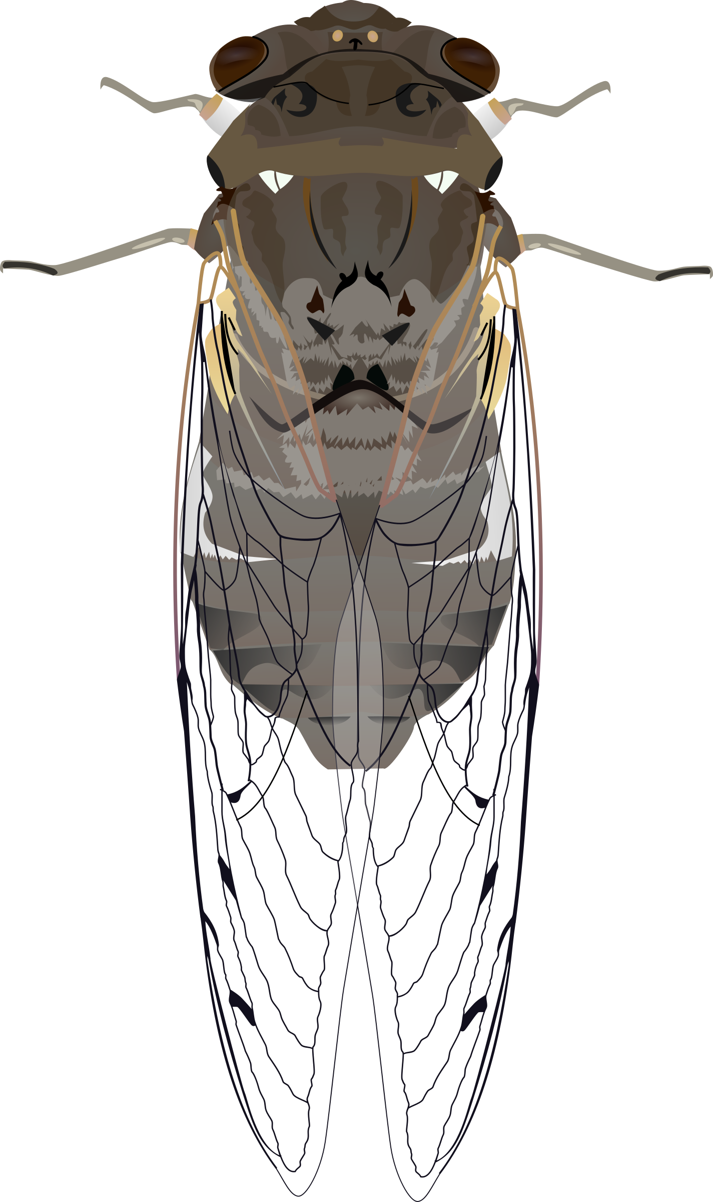 clip royalty free stock Big image png. Bugs clipart cicada.