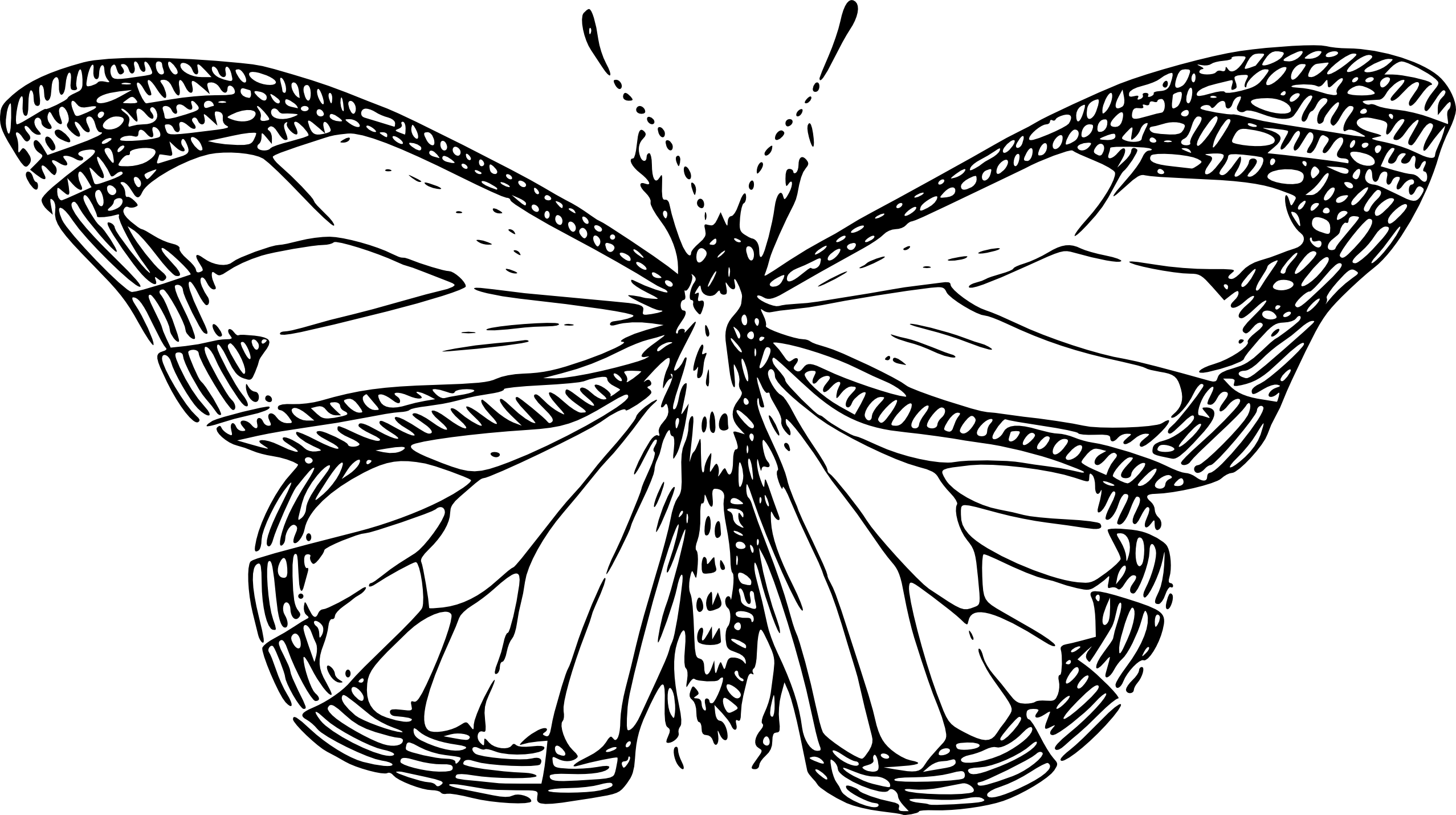 png black and white library Butterfly On Rose Drawing at GetDrawings