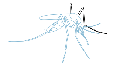 vector freeuse How to Draw a Mosquito