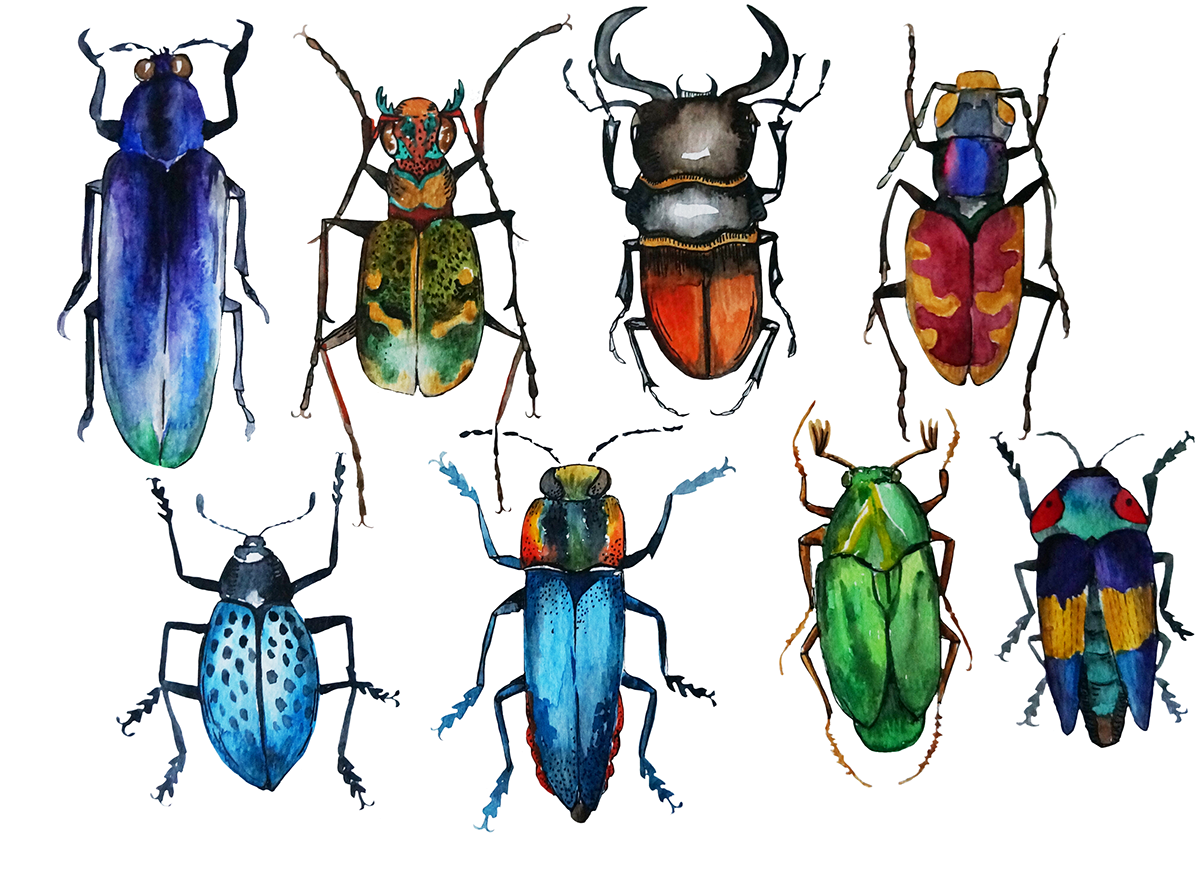 picture royalty free download Watercolor bugs on Behance