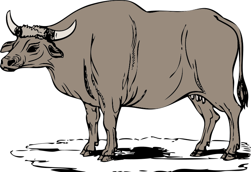 free Horns free on dumielauxepices. Bull clipart carabao philippine