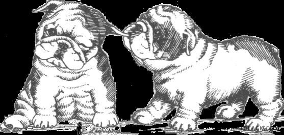 graphic free stock English clipartblack com animal. Bulldog clipart.