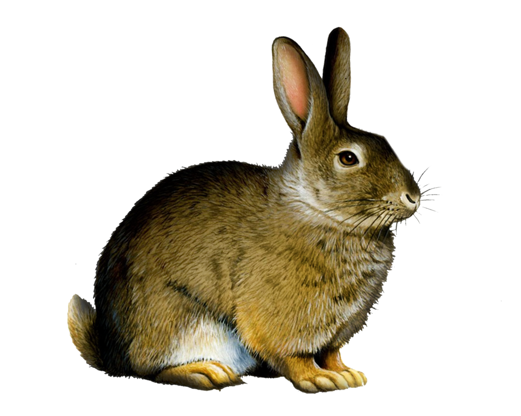 transparent library Bunnies clipart wild rabbit. Png by moonglowlilly on.
