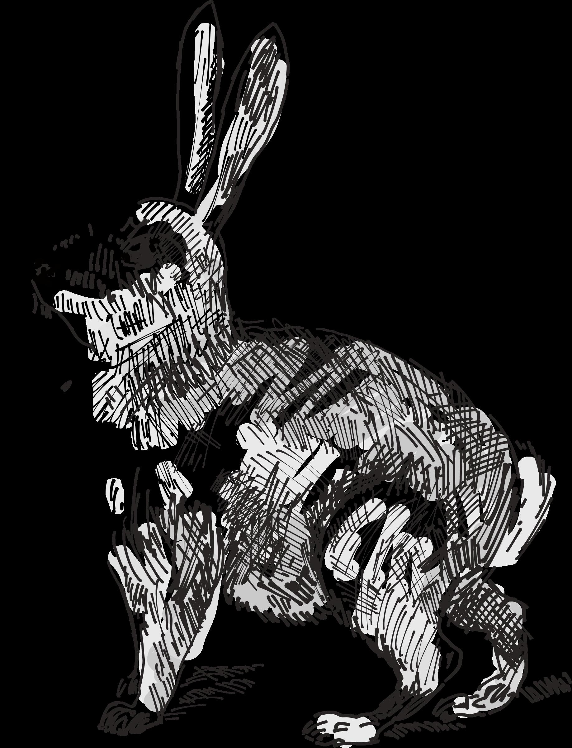 clip transparent download Bunnies clipart wild rabbit. .