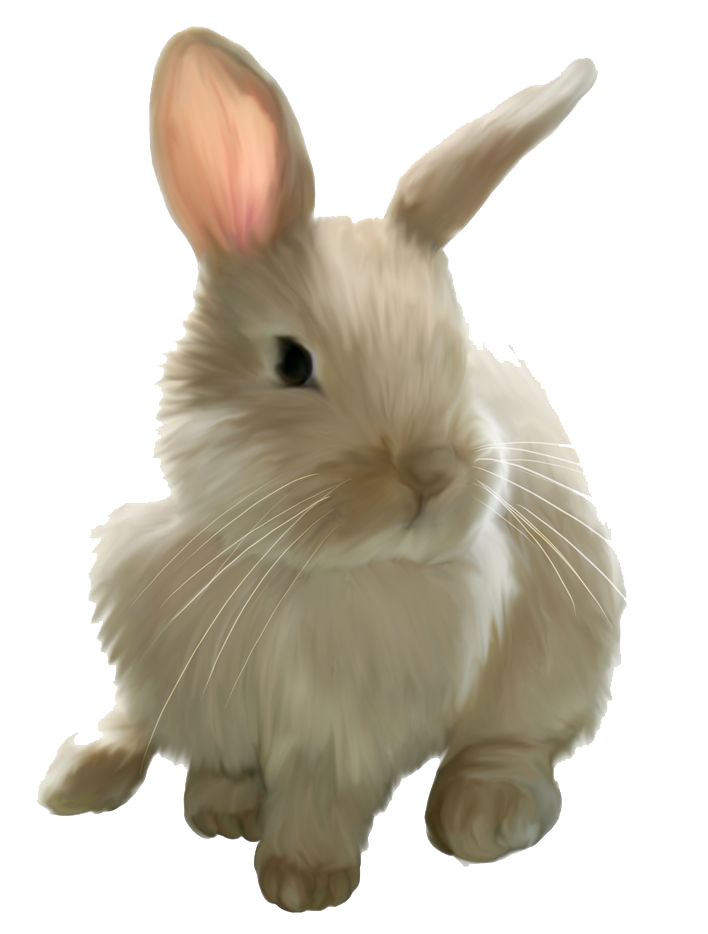 clipart free stock Bunny clipart transparent background. Rabbit png images free.
