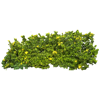 picture stock Vector bushes clipart. Download bush free png