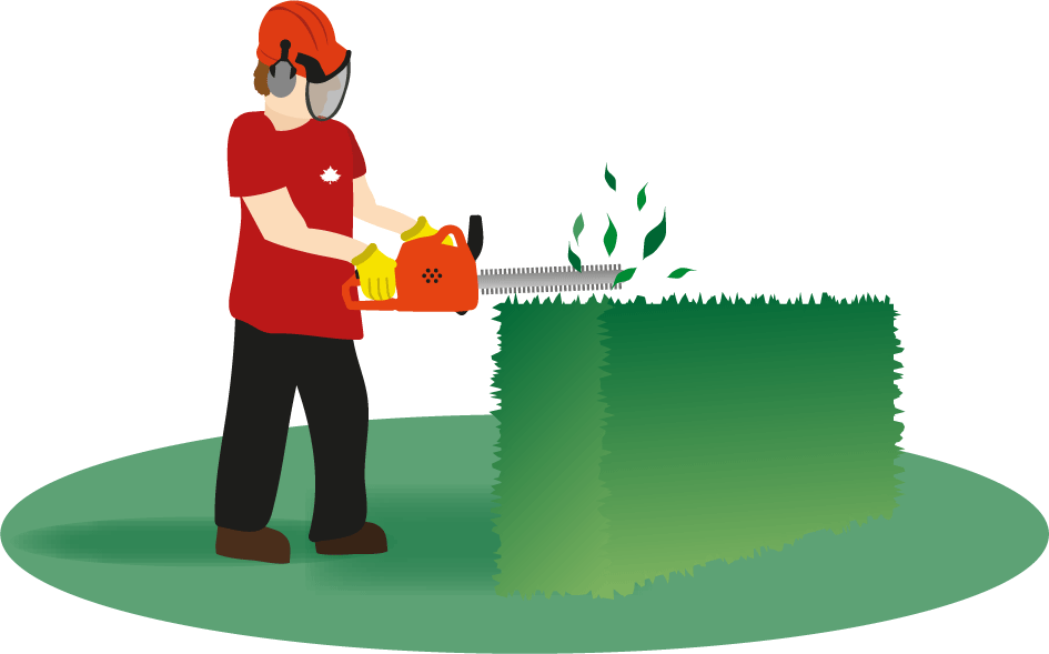 svg transparent stock Lawn clipart hedge trimming. Hedges free on dumielauxepices.