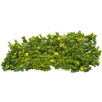 banner free library Bush clipart transparent flower. Branch and flowers png.