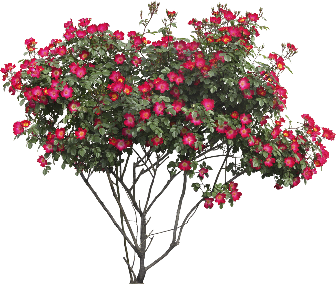 svg transparent stock Bushes png images free. Bush clipart transparent flower.