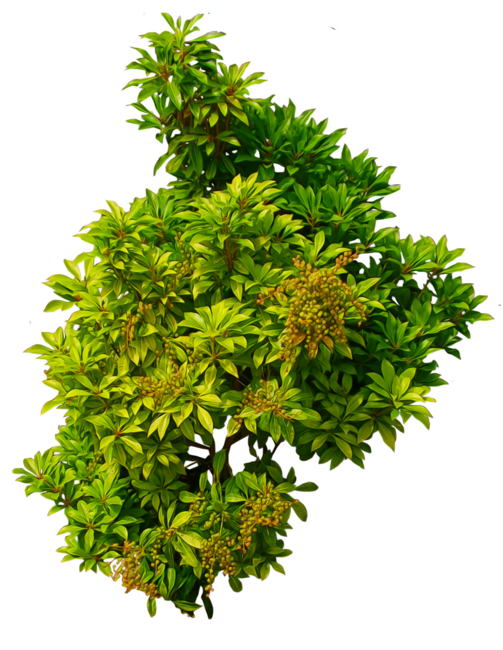 png freeuse Shrub png by alz. Vector bushes shrubbery